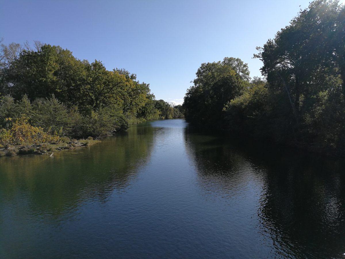 Pêcher le carnassier sur le Vidourle vers Aubais, dans le Gard