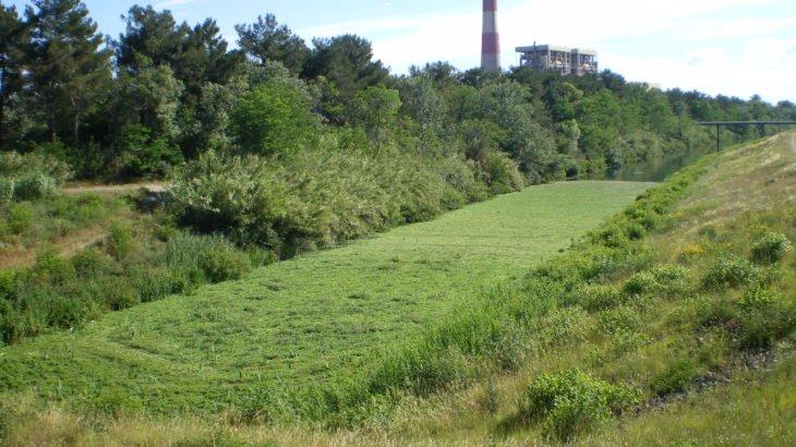 Laitue d'eau sur le contre canal
