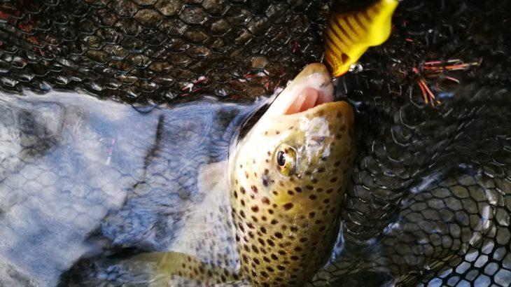 Pêche de la truite aux leurres dans le Gard en été