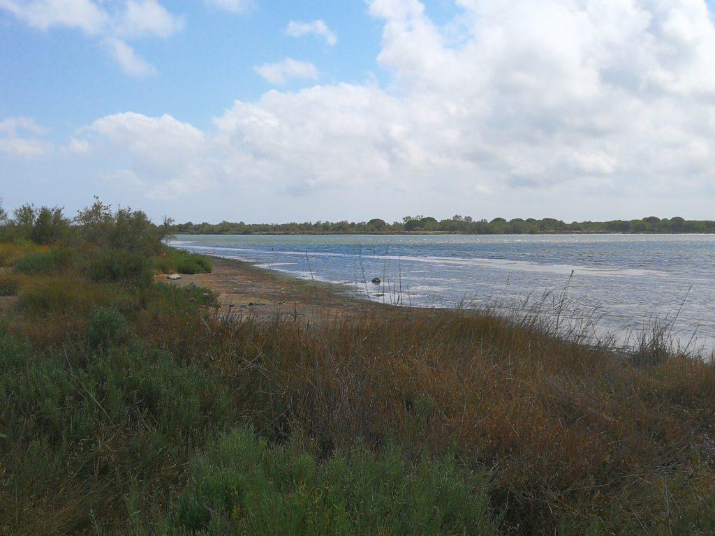 Pêche sur l'étang du Ponant dans le Gard