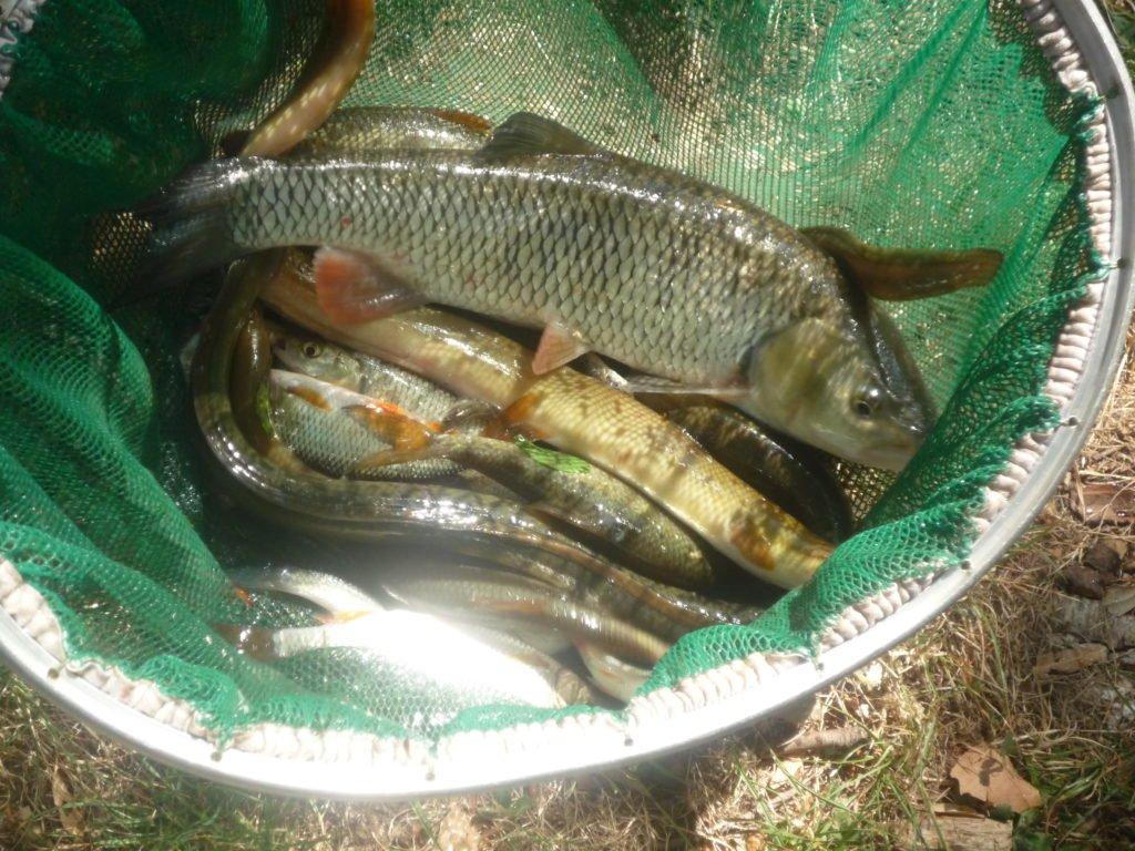 Pêche au coup en hiver dans le Gard